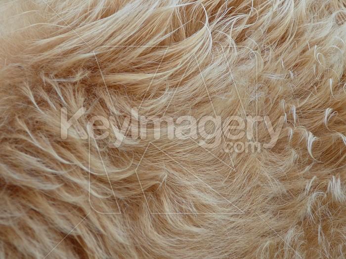 cows hair Photo #1613