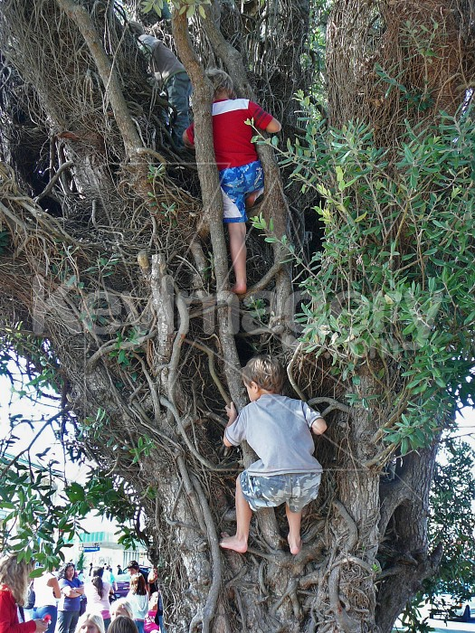 Creatures in a tree Photo #1148