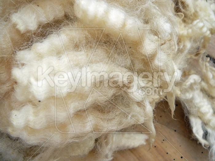 Crimp of wool Photo #6008