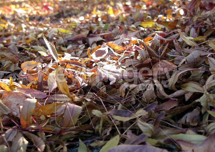 Deciduous leaves Photo #12593