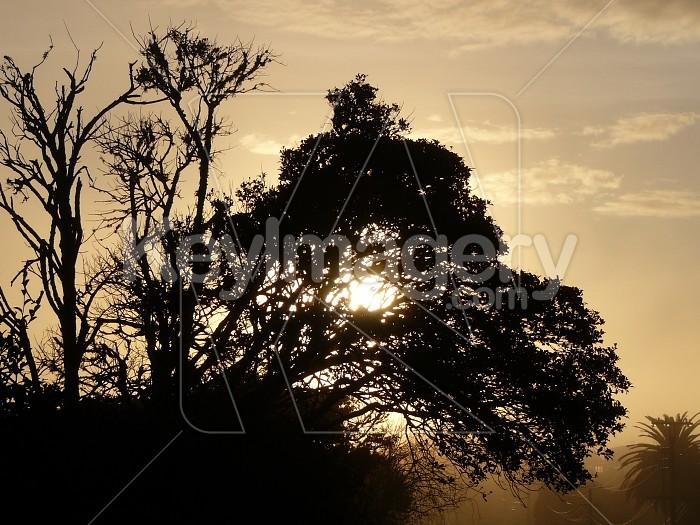 Early sun Photo #1115