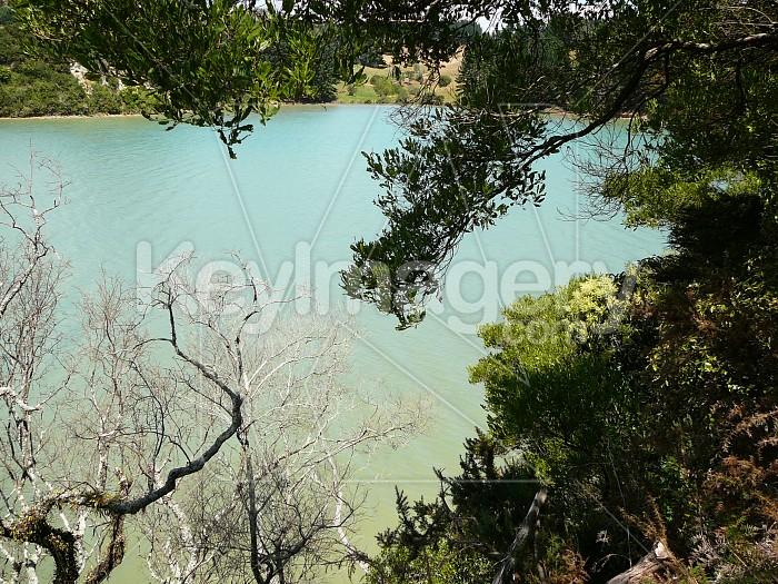 Estuary through the trees Photo #6958