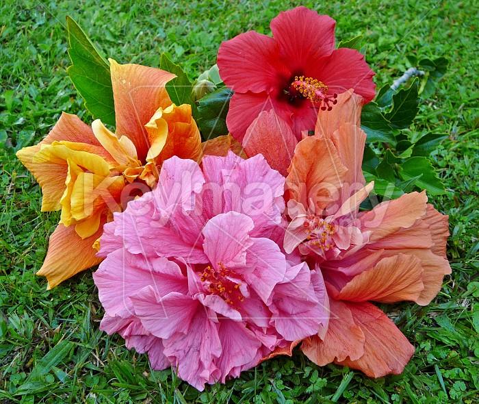 Fallen flowers Photo #1075