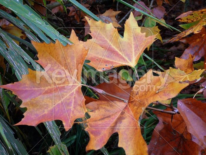 Fallen leaves Photo #1683