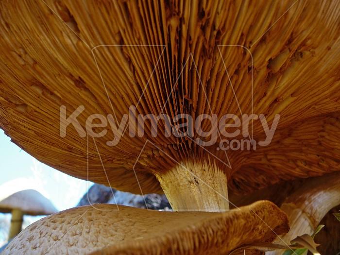 Fascinating fungi Photo #1030
