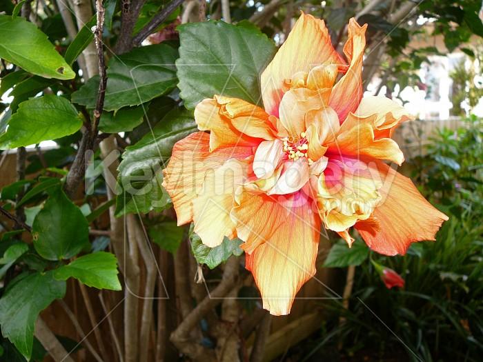 flower Photo #919