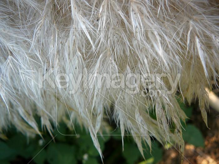 Fluffy toitoi Photo #1128