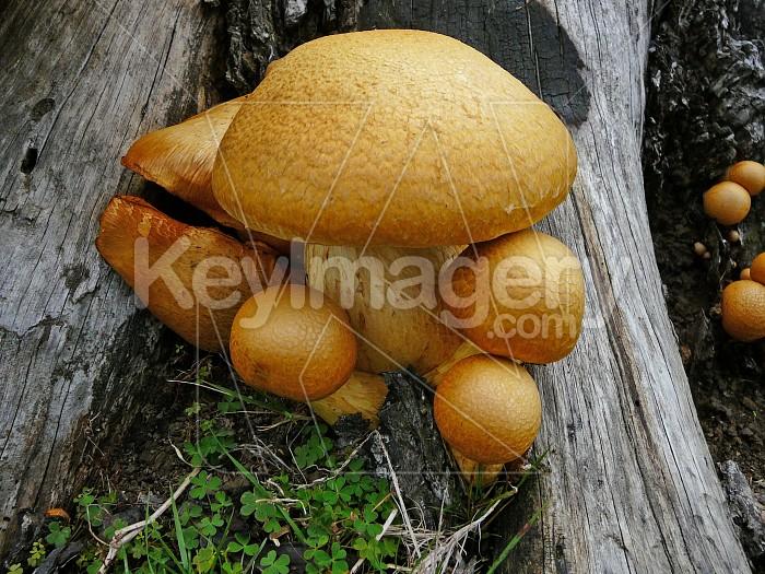 Fungi plant on burnt tree stump Photo #948