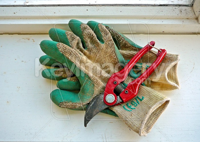 Gloves and clippers 2 Photo #1367