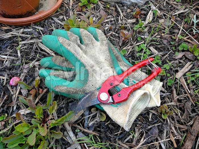 Gloves and clippers in garden Photo #1359