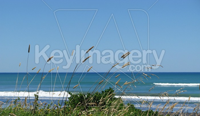 Grasses at the beach Photo #6377