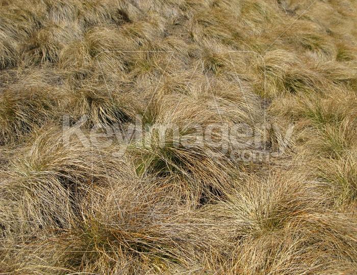 Grasses Photo #6510