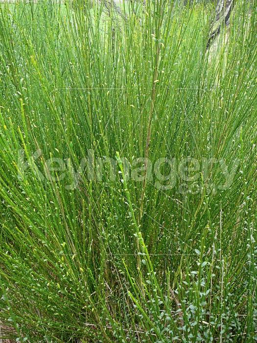 green stalks Photo #1807