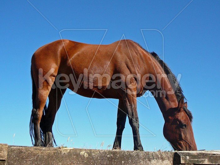 Horse eating the grass Photo #7836