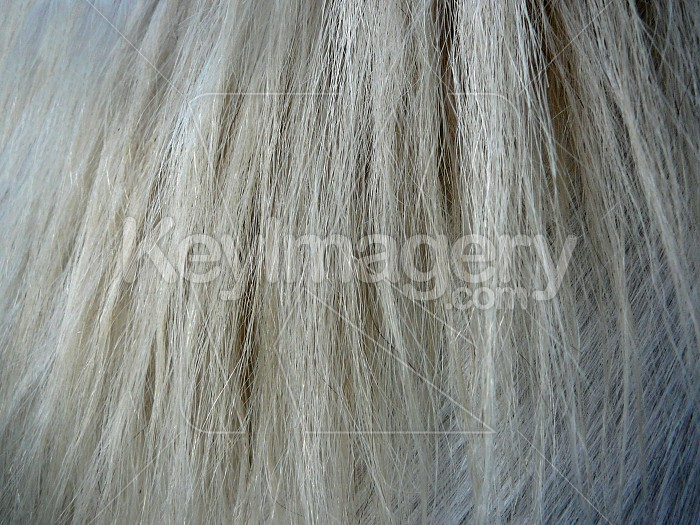 horse hair Photo #2194