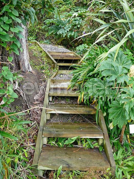 Larger steps Photo #1351