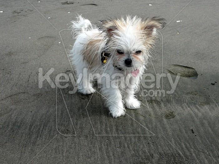 Little  dog Photo #1274