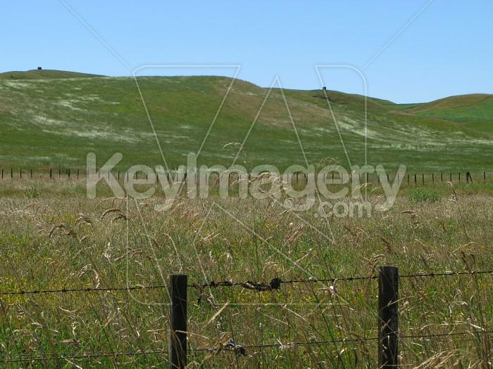 Long grass Photo #7304