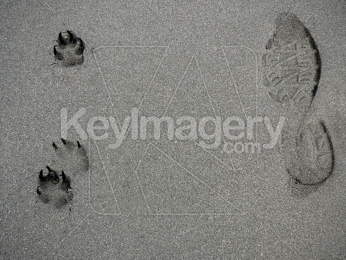 Mans best friends footprints Photo #1358