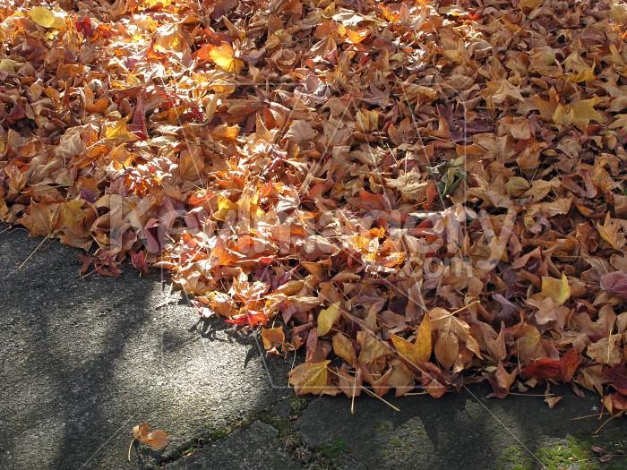 Masses of autumn leaves Photo #12486
