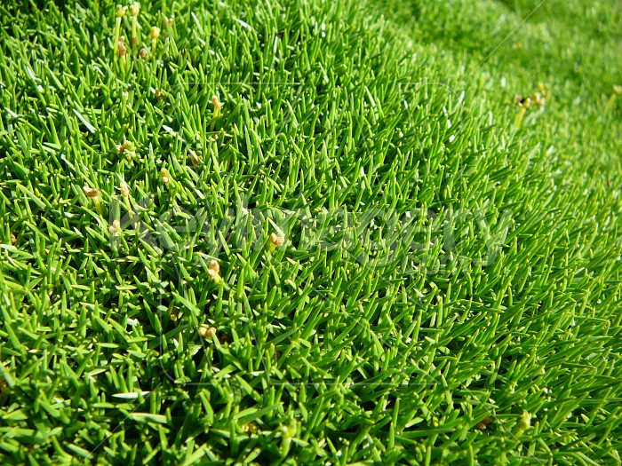moss close up Photo #1374