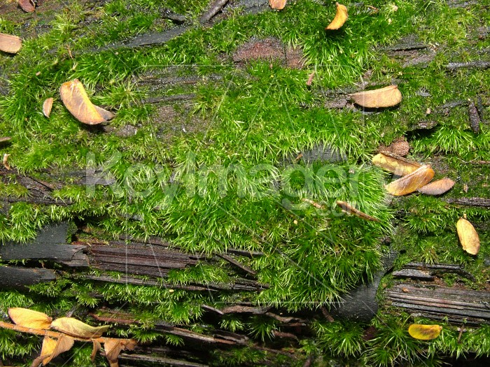 Moss growth Photo #2255