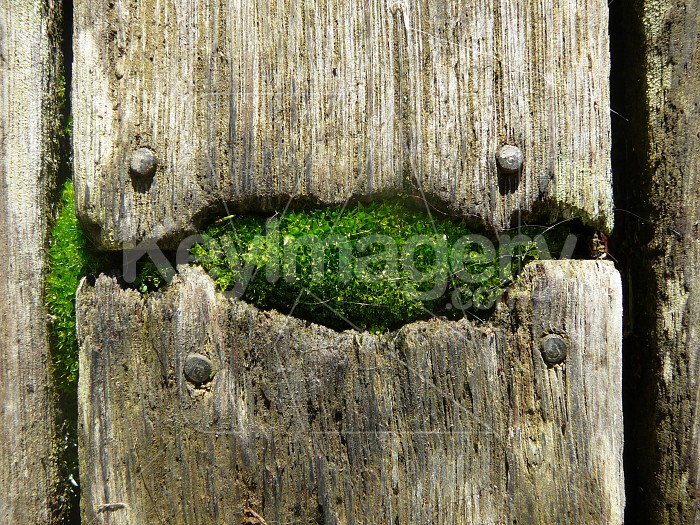 Moss in timber Photo #1437