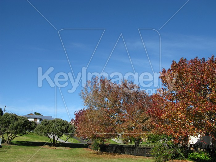 Park and trees and blue sky Photo #12513