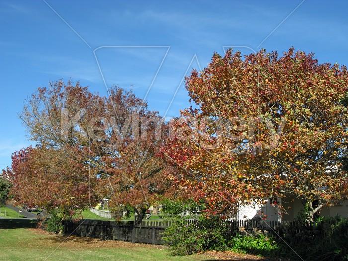 Park trees Photo #12514
