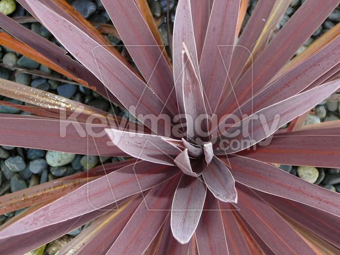 Purple flax Photo #1884