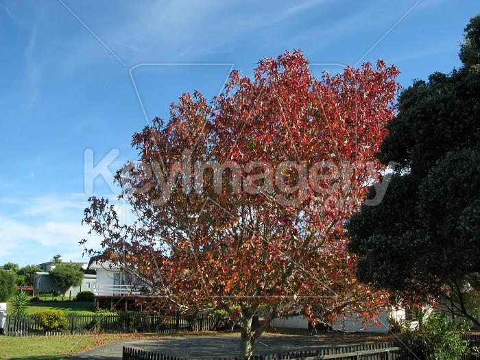 Red tree Photo #12516