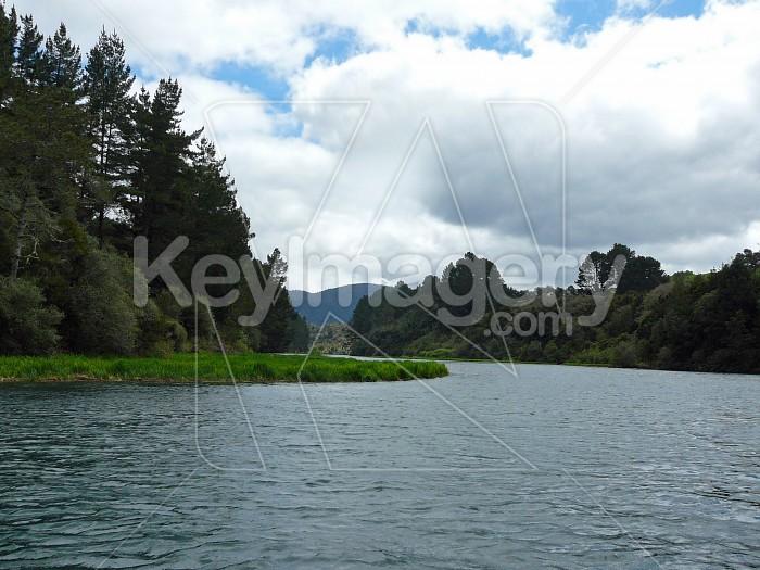 River grass Photo #4721