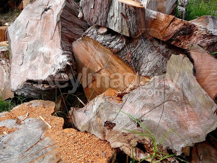 Sawn timber Photo #1637