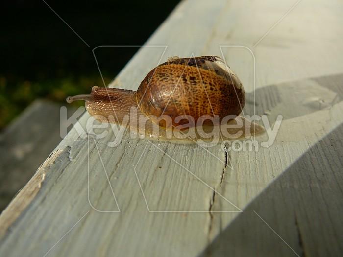 Snail pace Photo #1060