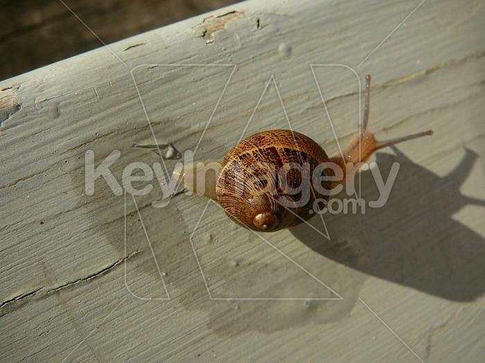 Snail trail Photo #1061