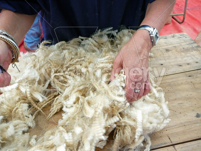 Sorting the wool Photo #6051