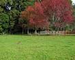 Colourful maple