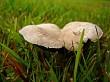 Twin mushrooms