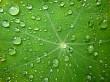 Dew on plant