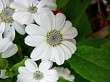 Close up white flower