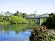 Camellia and bridge