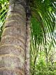 Rings on tree trunk