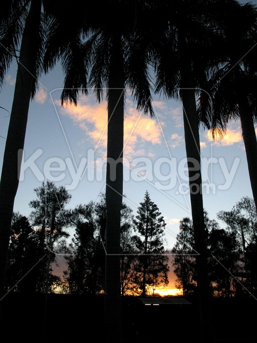 Sunset through the tall palm trees Photo #12517