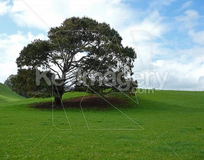 Tree in field Photo #4722