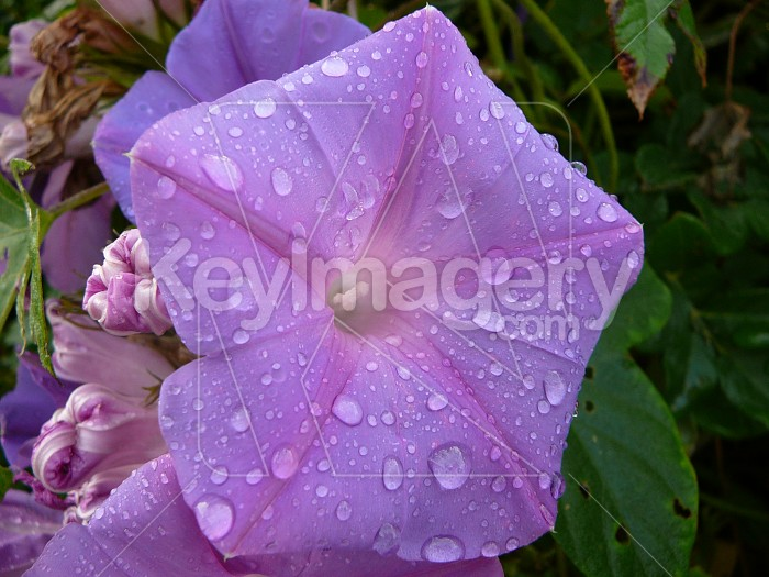 Water on petals Photo #1139