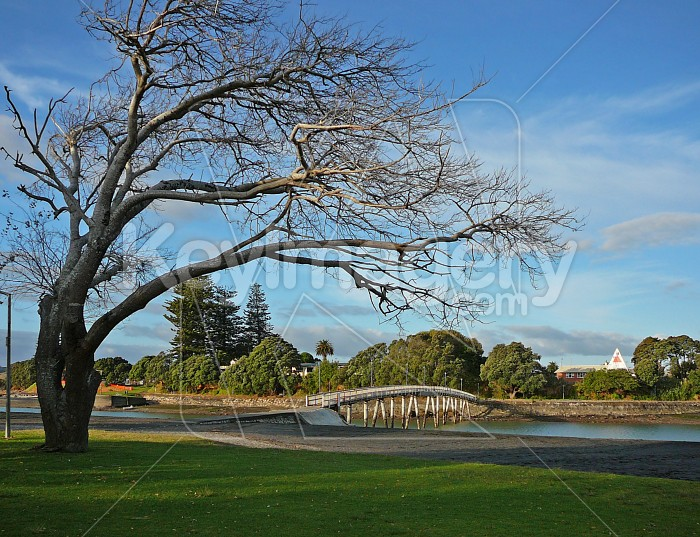 Wind sculptured tree Photo #964