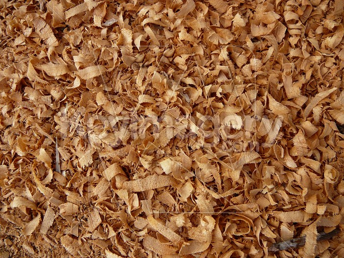 Woodshavings, Photo #1610