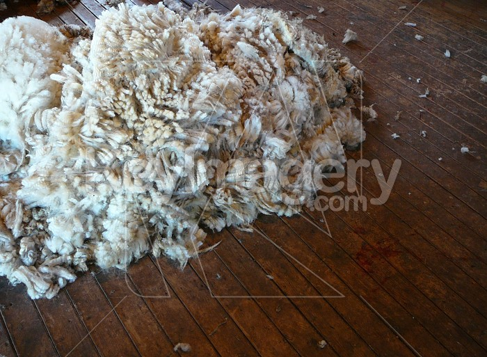 Wool pile on the boards Photo #7853