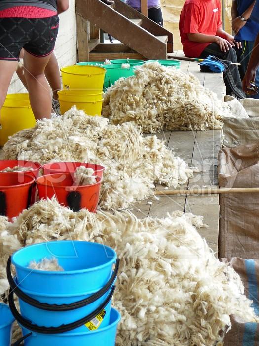 Wool piles Photo #6230