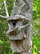 Any birdie home